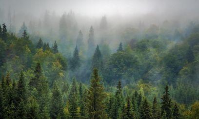 Russlands Wald-Reichtum beziffert
